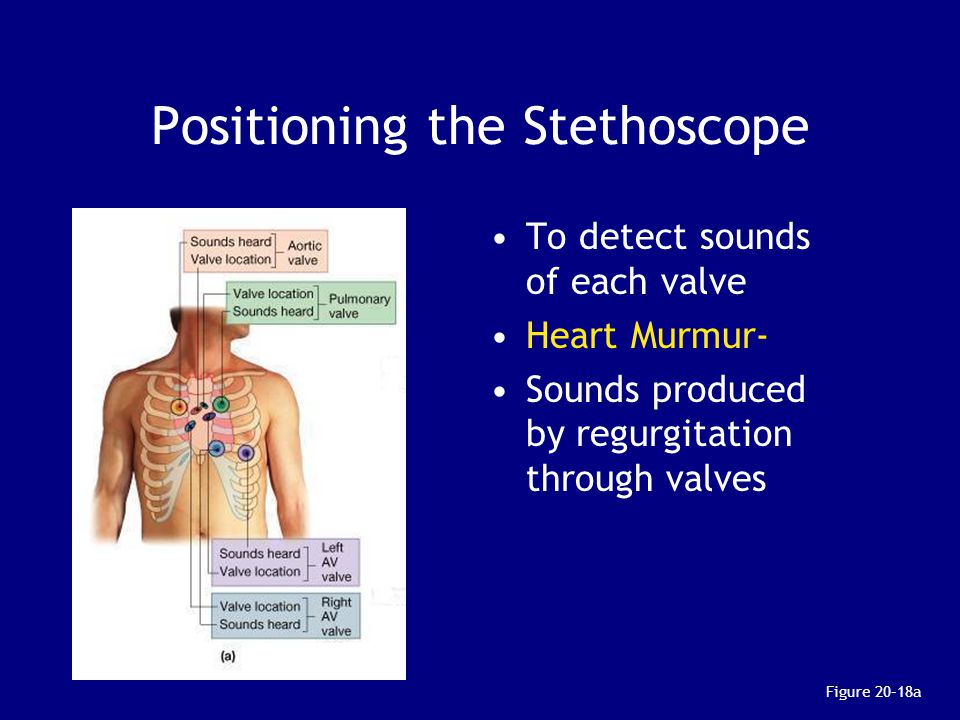 Positioning the Stethoscope