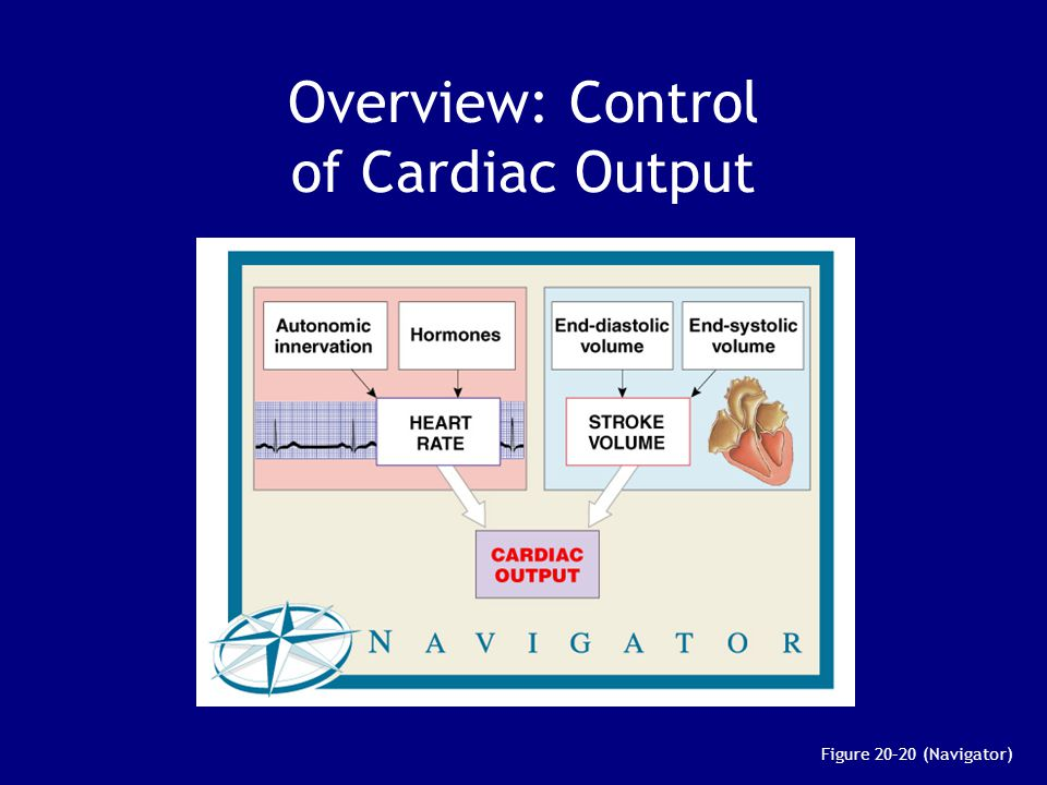 Overview: Control of Cardiac Output