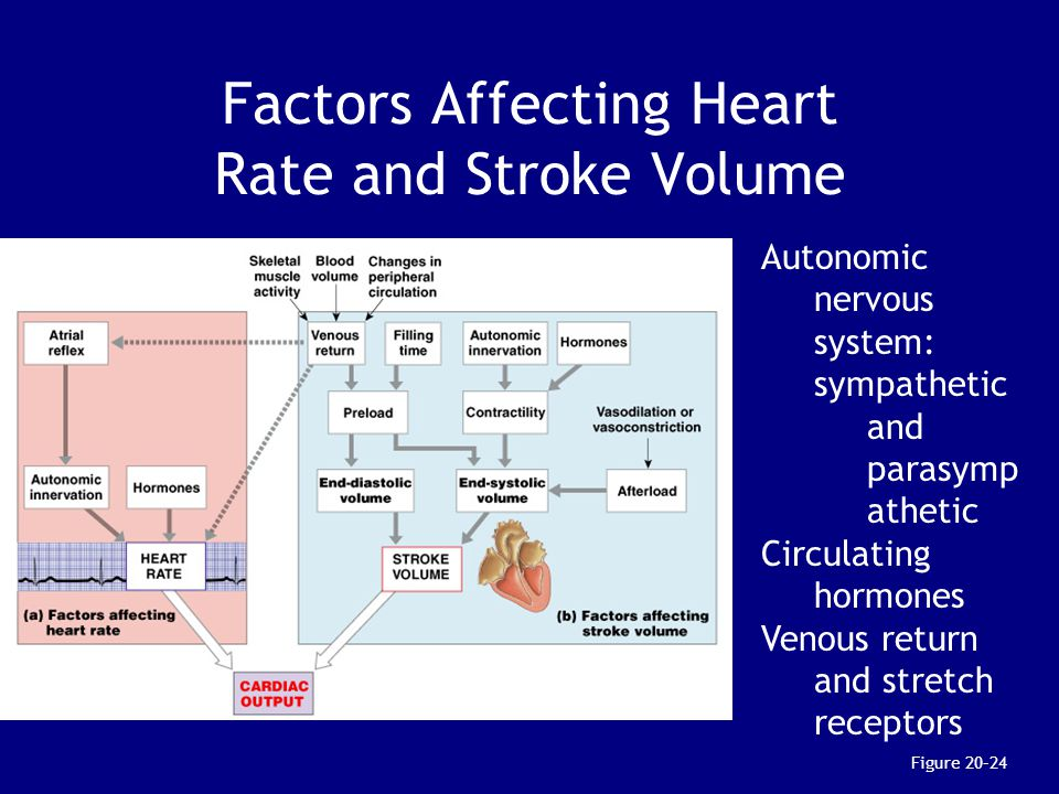 Factors Affecting Heart Rate and Stroke Volume