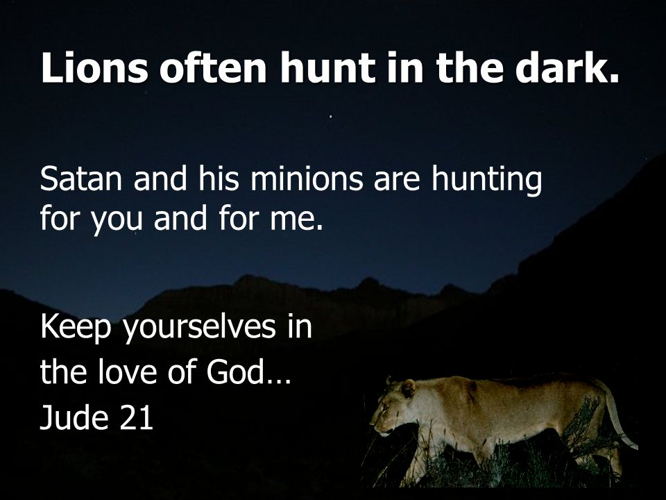 Lions often hunt in the dark.