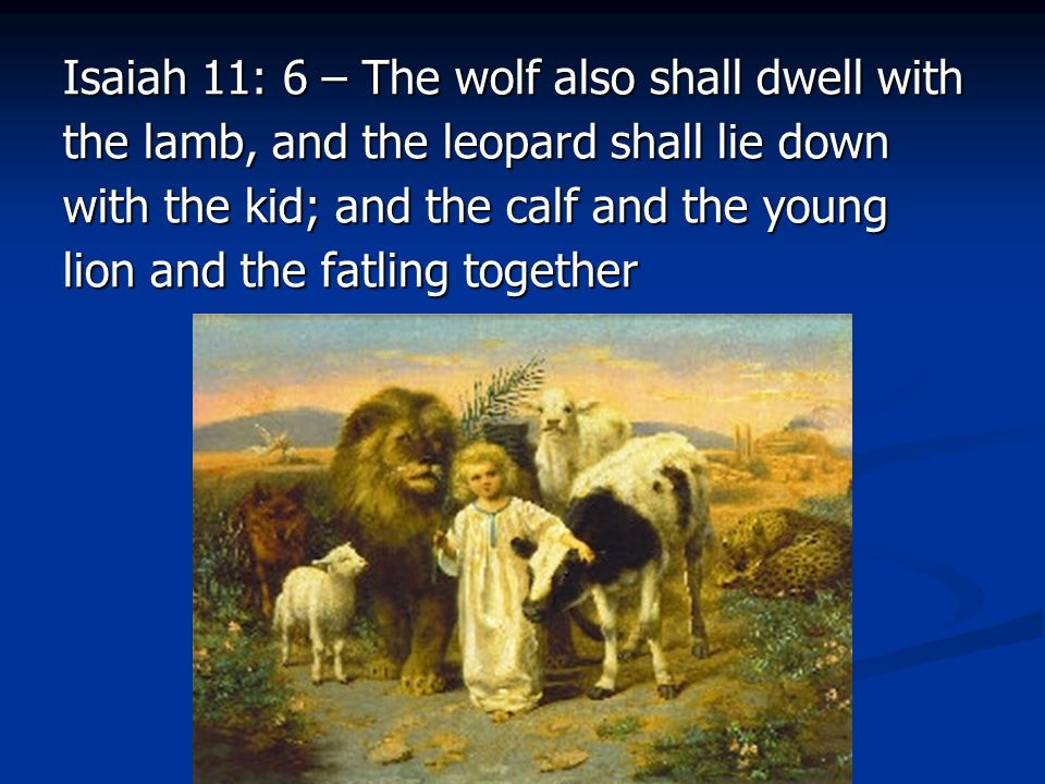 Isaiah 11: 6 – The wolf also shall dwell with the lamb, and the leopard shall lie down with the kid; and the calf and the young lion and the fatling together