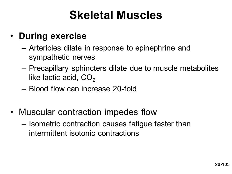 Skeletal Muscles During exercise Muscular contraction impedes flow