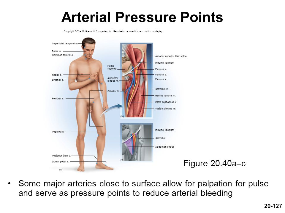 Arterial Pressure Points