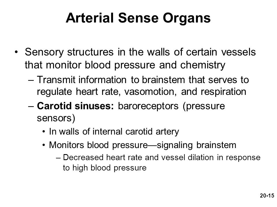 Arterial Sense Organs Sensory structures in the walls of certain vessels that monitor blood pressure and chemistry.
