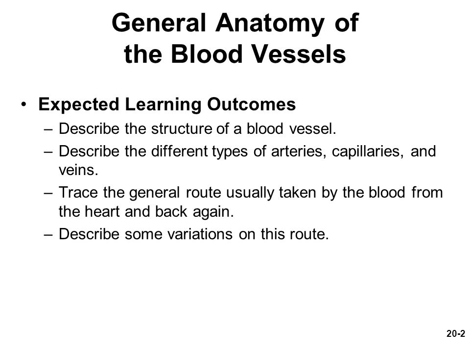 General Anatomy of the Blood Vessels