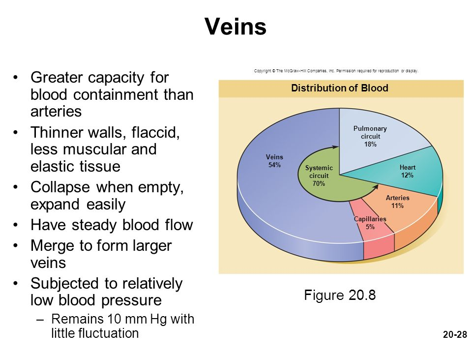 Veins Greater capacity for blood containment than arteries