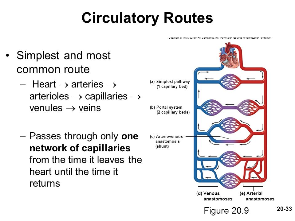 Circulatory Routes Simplest and most common route