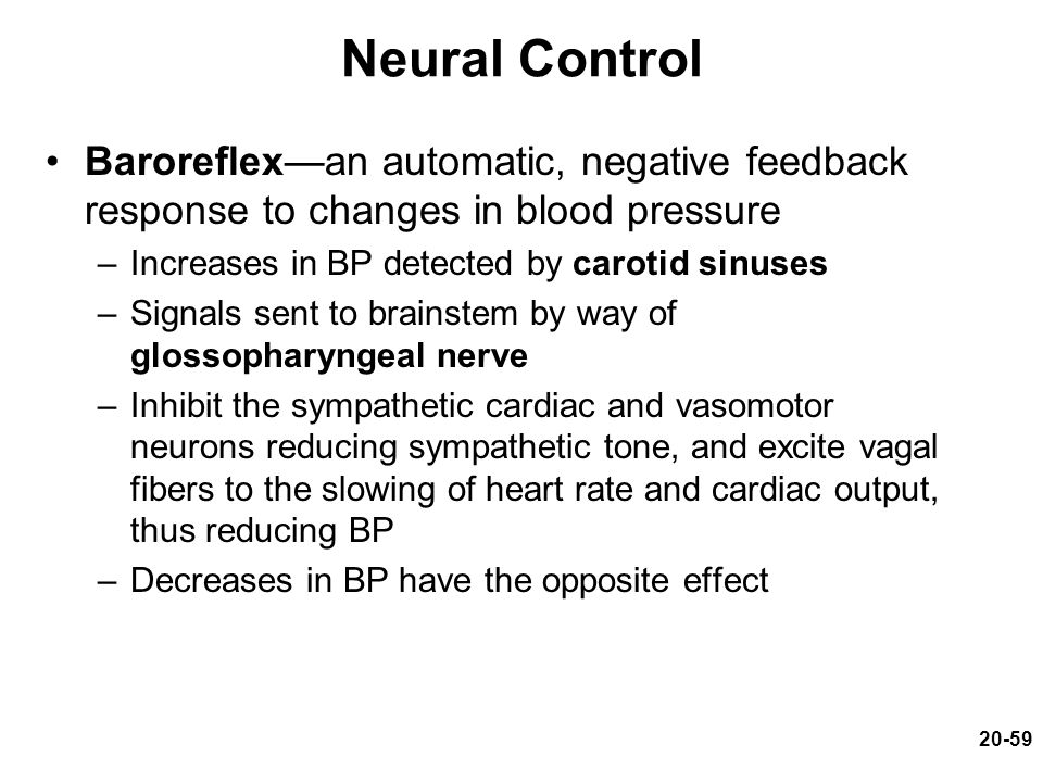Neural Control Baroreflex—an automatic, negative feedback response to changes in blood pressure. Increases in BP detected by carotid sinuses.