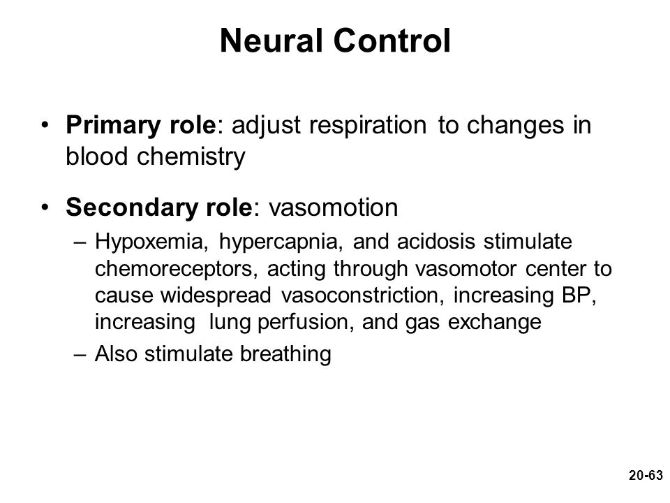 Neural Control Primary role: adjust respiration to changes in blood chemistry. Secondary role: vasomotion.
