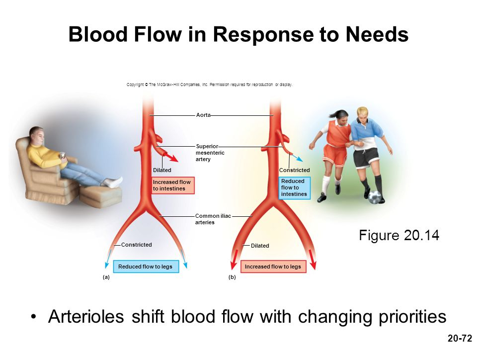 Blood Flow in Response to Needs