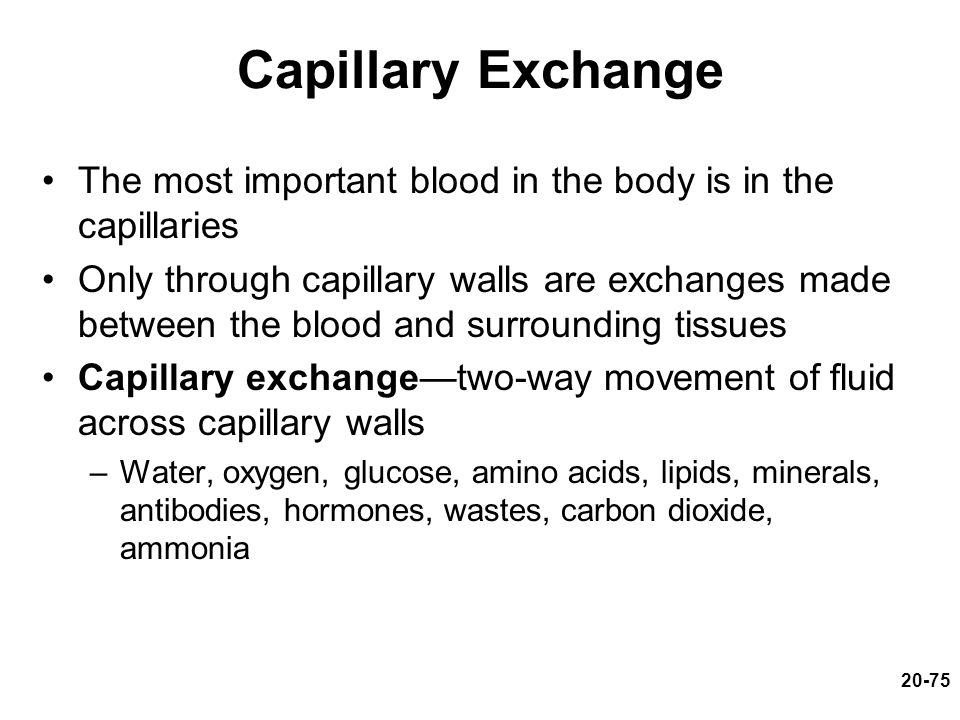 Capillary Exchange The most important blood in the body is in the capillaries.