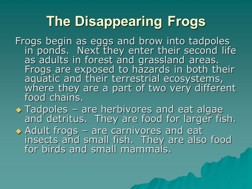The Disappearing Frogs
