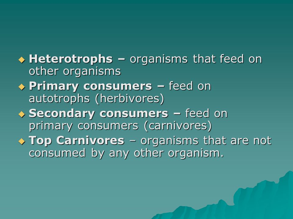 Heterotrophs – organisms that feed on other organisms