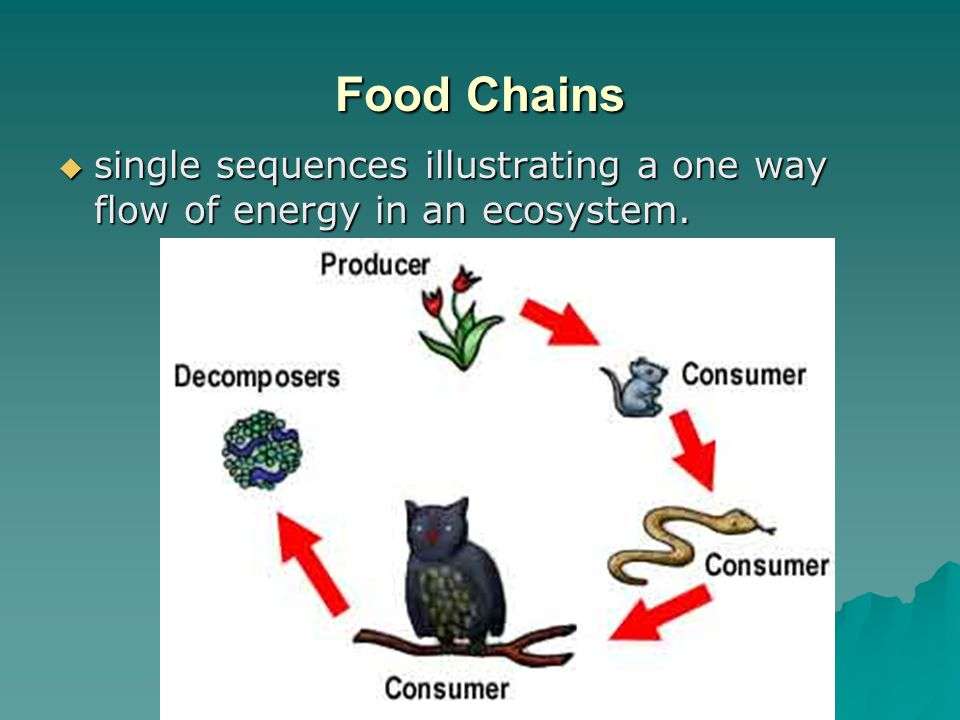 Food Chains single sequences illustrating a one way flow of energy in an ecosystem.