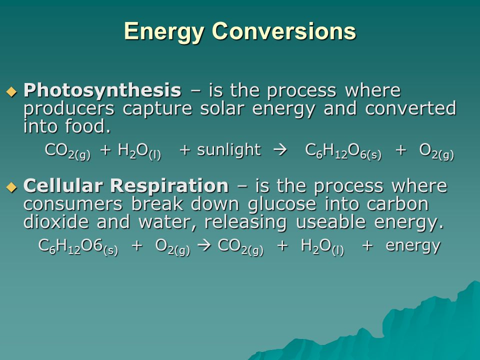 Energy Conversions Photosynthesis – is the process where producers capture solar energy and converted into food.