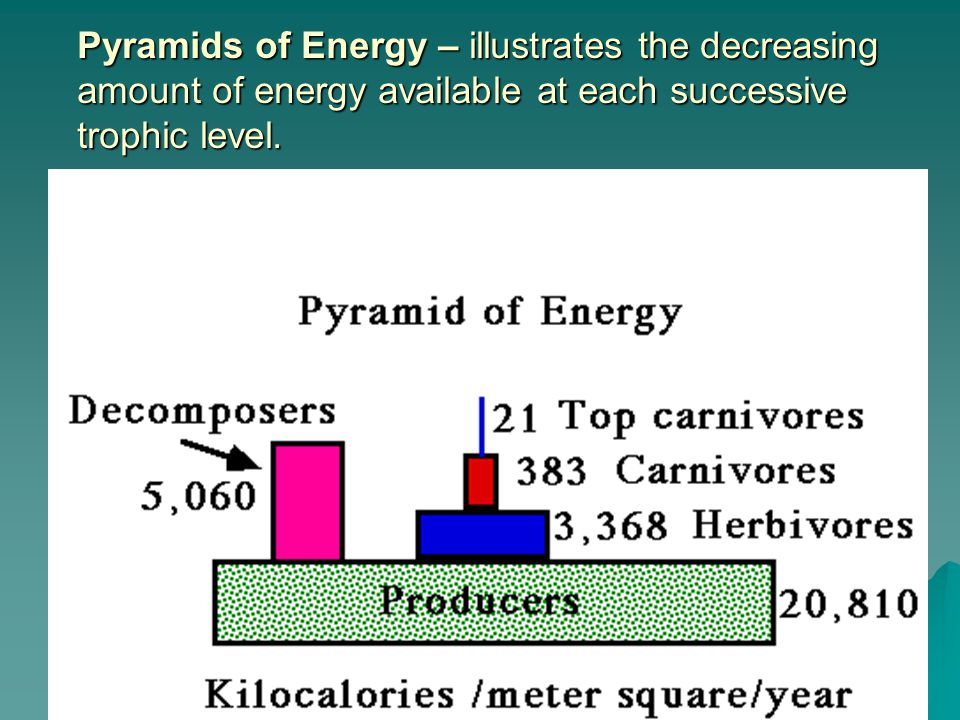 Pyramids of Energy – illustrates the decreasing amount of energy available at each successive trophic level.