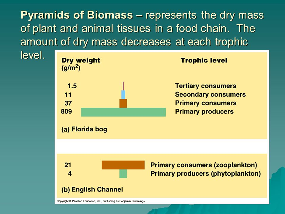 Pyramids of Biomass – represents the dry mass of plant and animal tissues in a food chain.