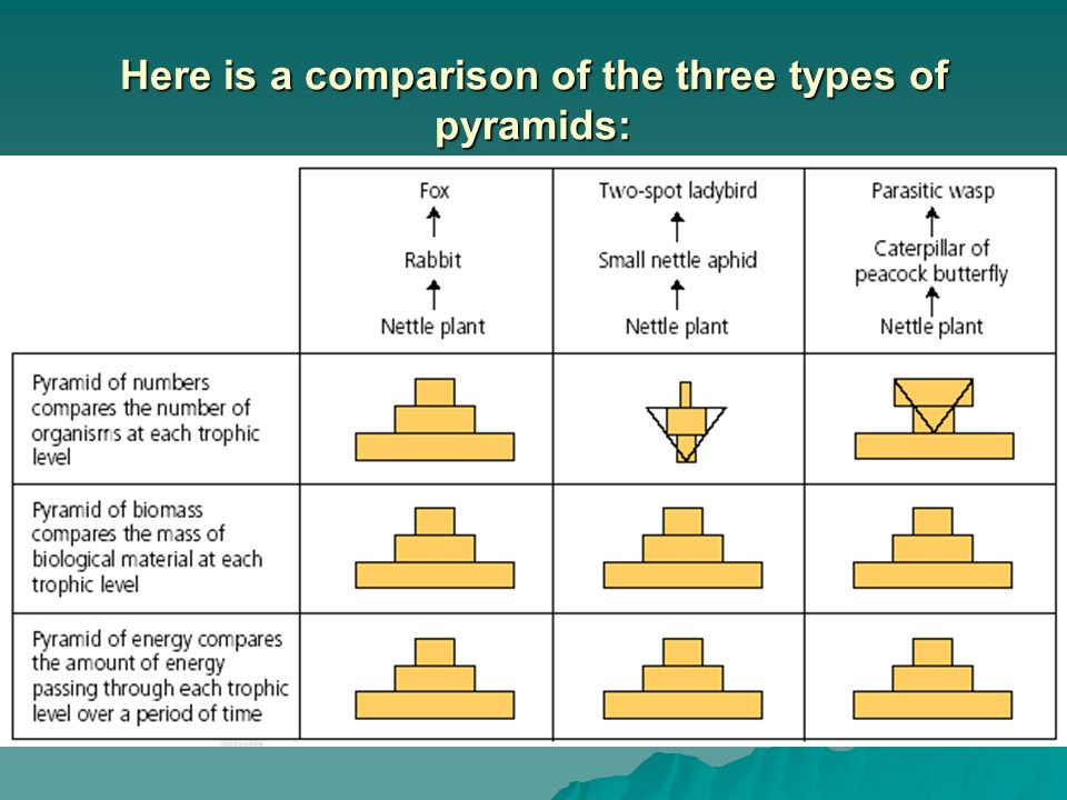 Here is a comparison of the three types of pyramids: