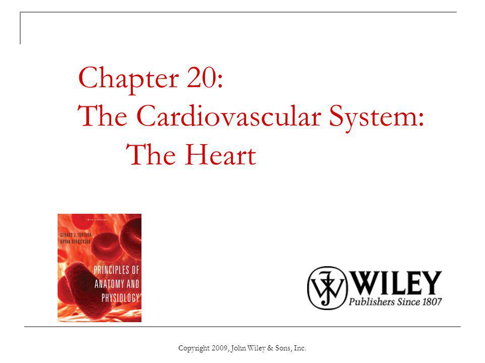Chapter 20: The Cardiovascular System: The Heart