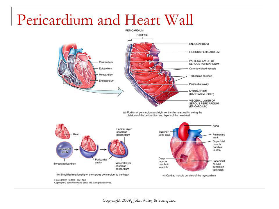 Pericardium and Heart Wall
