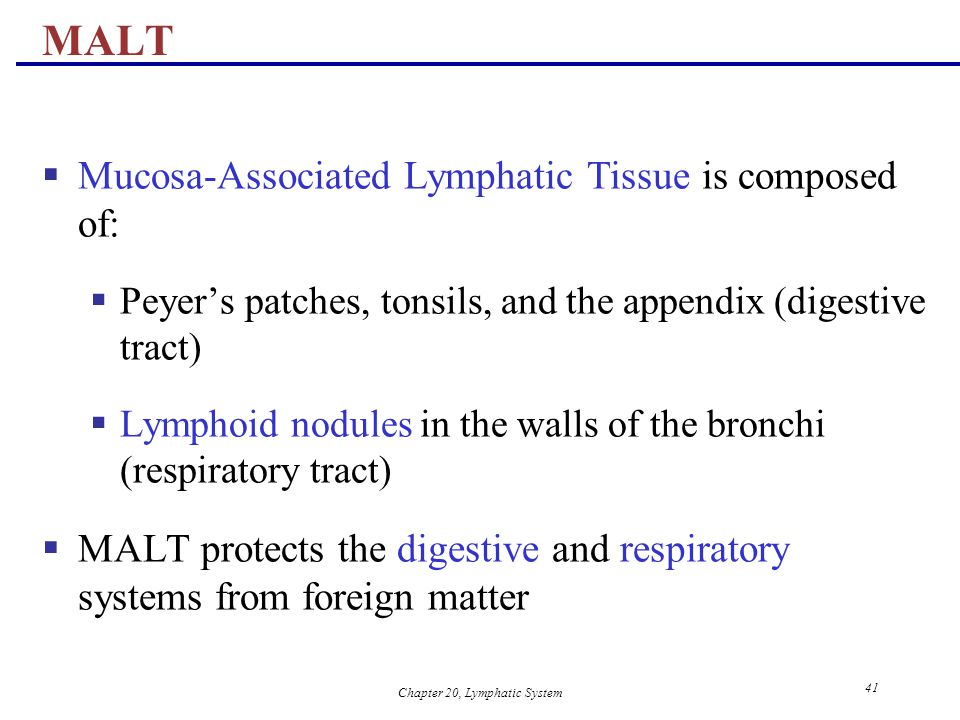 Chapter 20, Lymphatic System