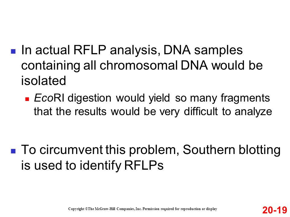 In actual RFLP analysis, DNA samples containing all chromosomal DNA would be isolated