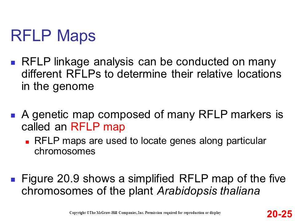 RFLP Maps RFLP linkage analysis can be conducted on many different RFLPs to determine their relative locations in the genome.