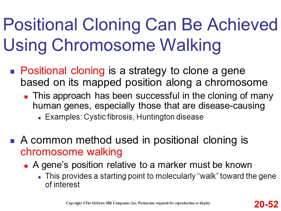Positional Cloning Can Be Achieved Using Chromosome Walking