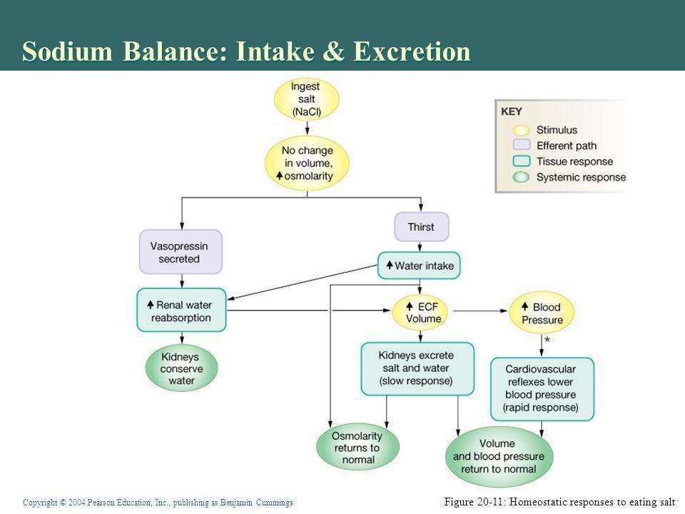 Sodium Balance: Intake & Excretion