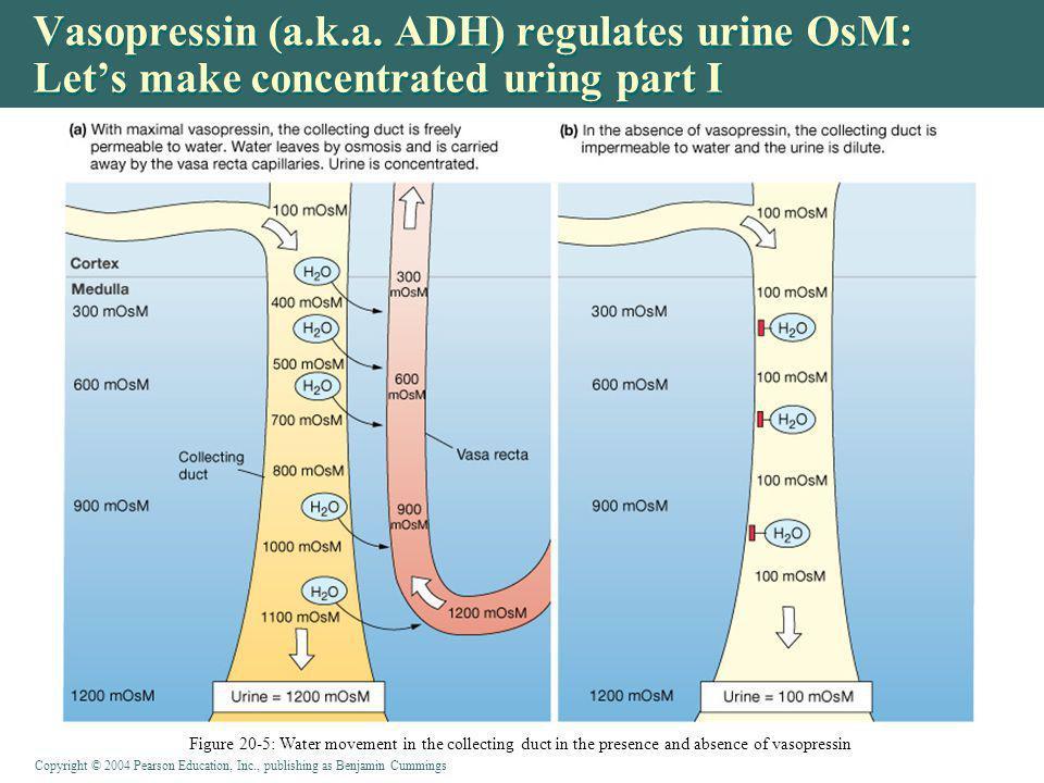 Vasopressin (a.k.a. ADH) regulates urine OsM: Let's make concentrated uring part I