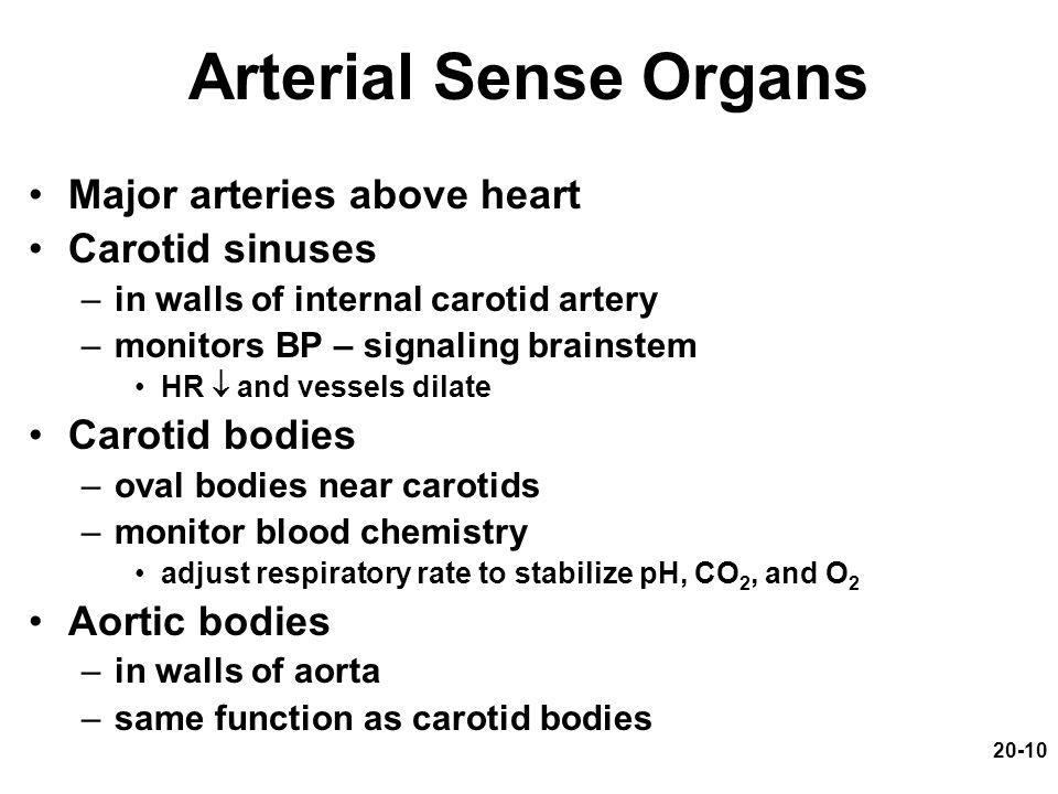 Arterial Sense Organs Major arteries above heart Carotid sinuses
