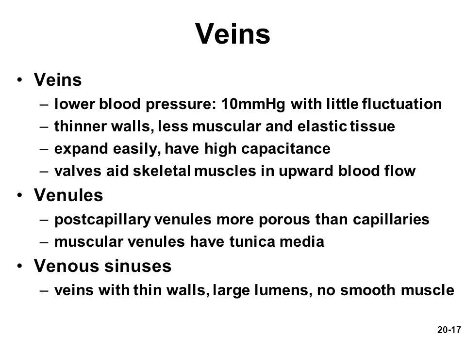 Veins Veins Venules Venous sinuses