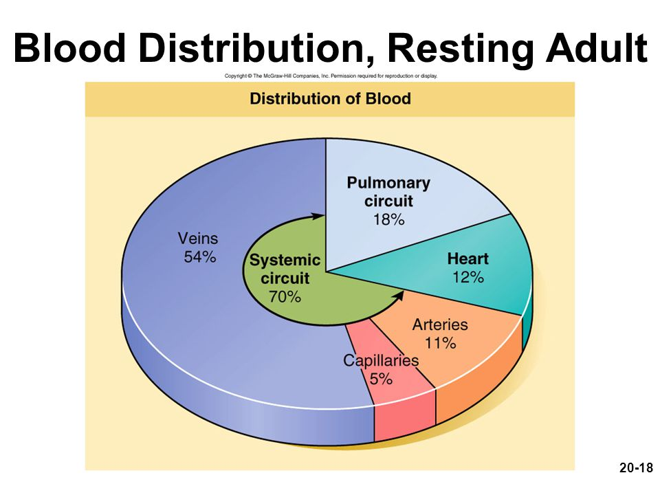 Blood Distribution, Resting Adult