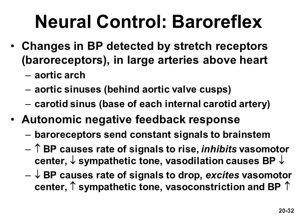 Neural Control: Baroreflex