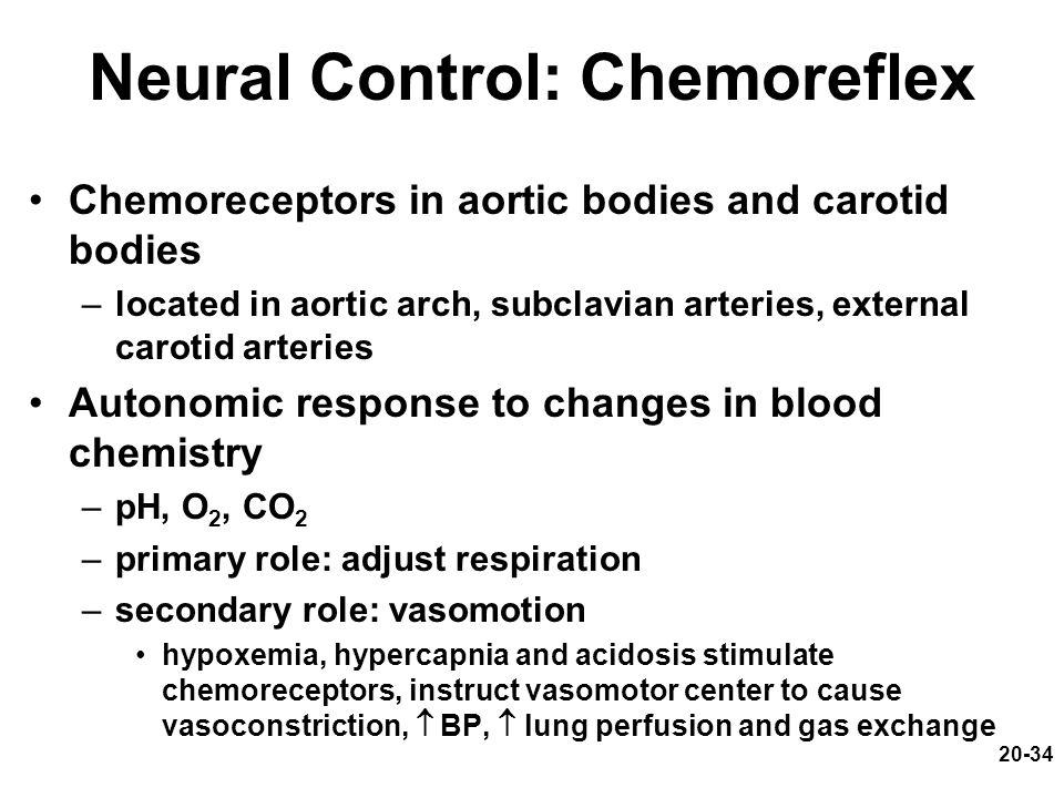 Neural Control: Chemoreflex