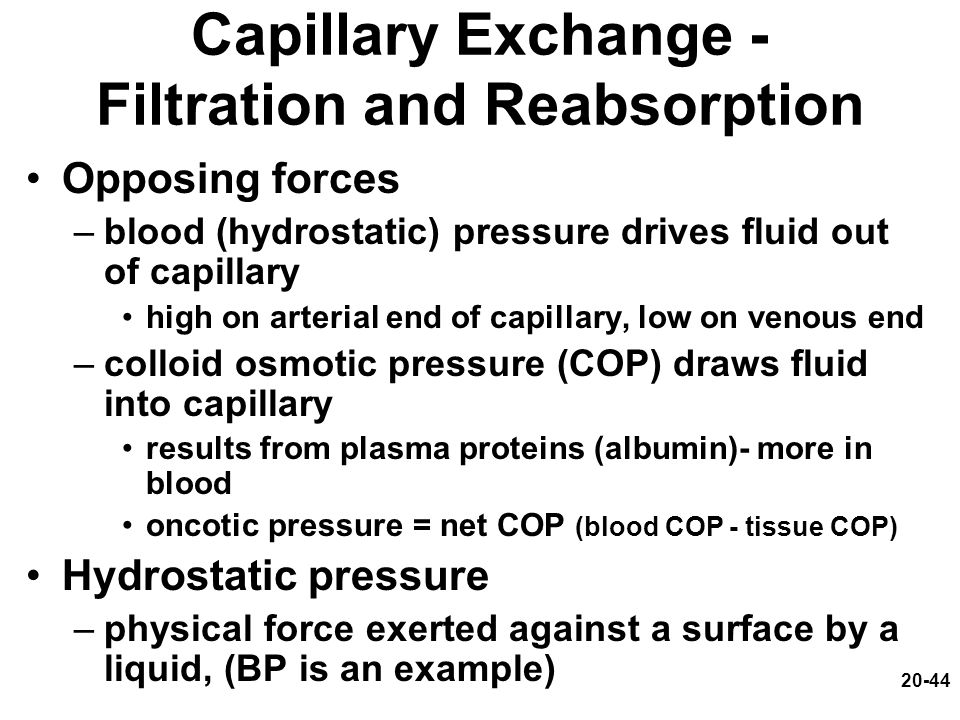 Capillary Exchange - Filtration and Reabsorption