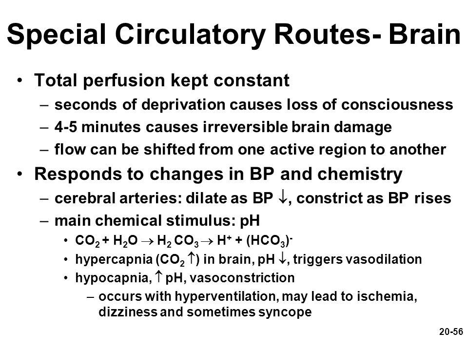 Special Circulatory Routes- Brain