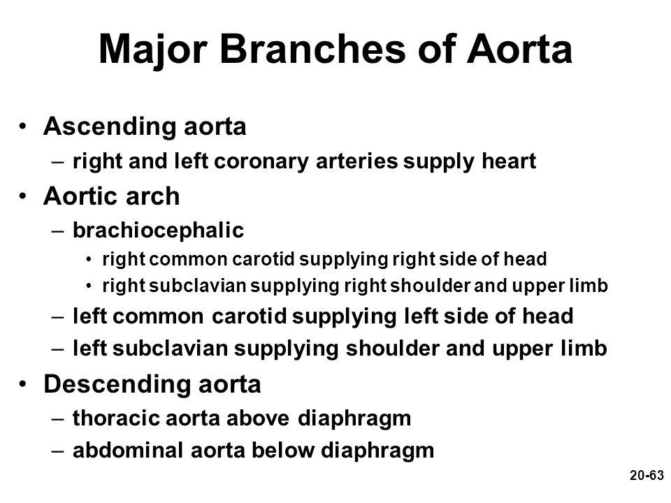 Major Branches of Aorta
