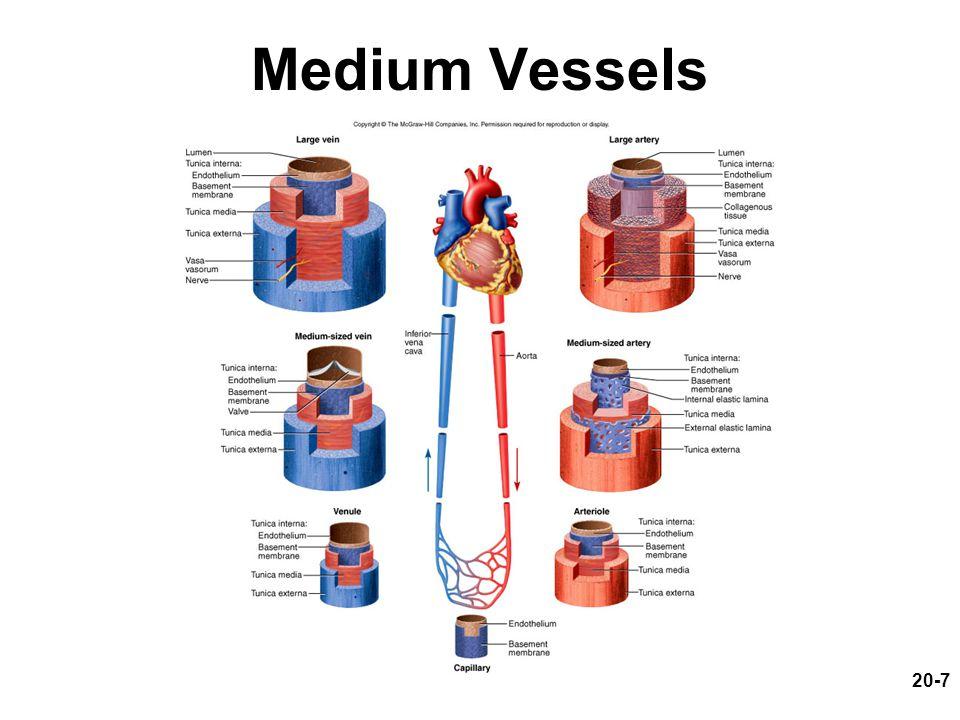 Medium Vessels