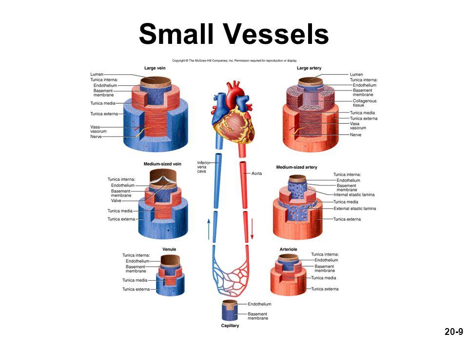 Small Vessels