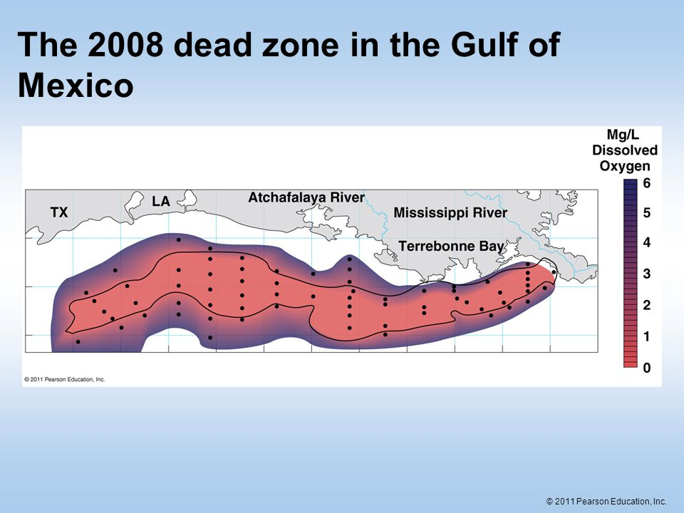 The 2008 dead zone in the Gulf of Mexico