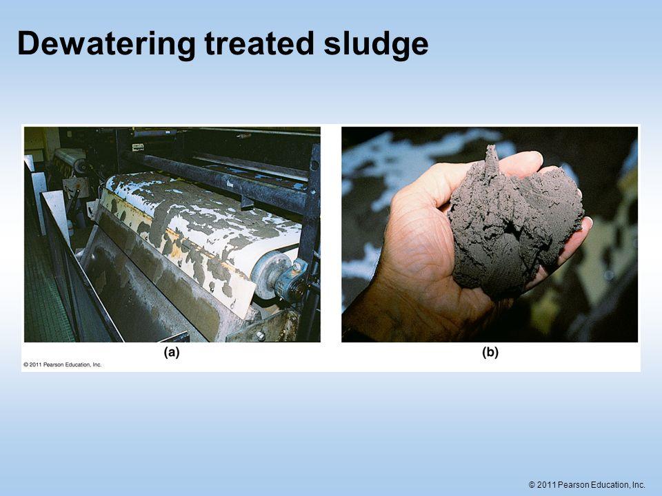 Dewatering treated sludge