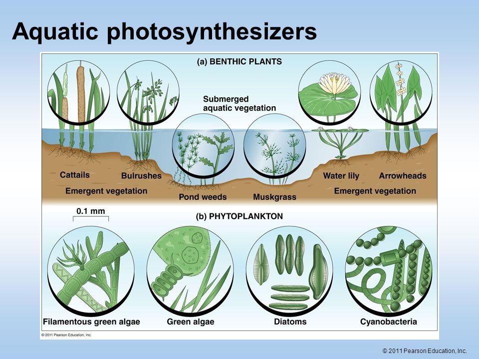 Aquatic photosynthesizers