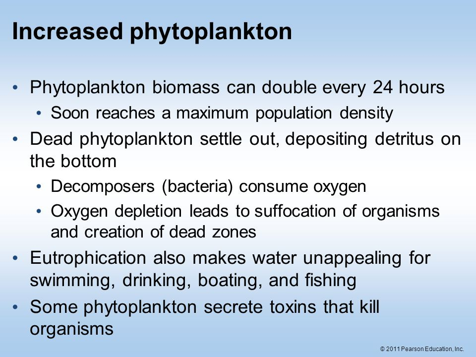 Increased phytoplankton