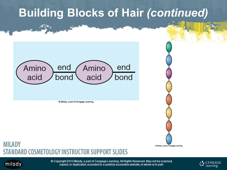 Building Blocks of Hair (continued)