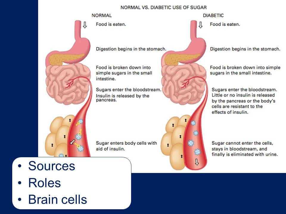 Sources Roles Brain cells Talking Points