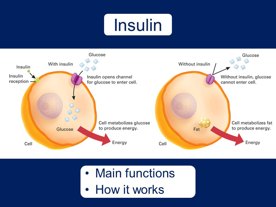 Insulin Main functions How it works Talking Points