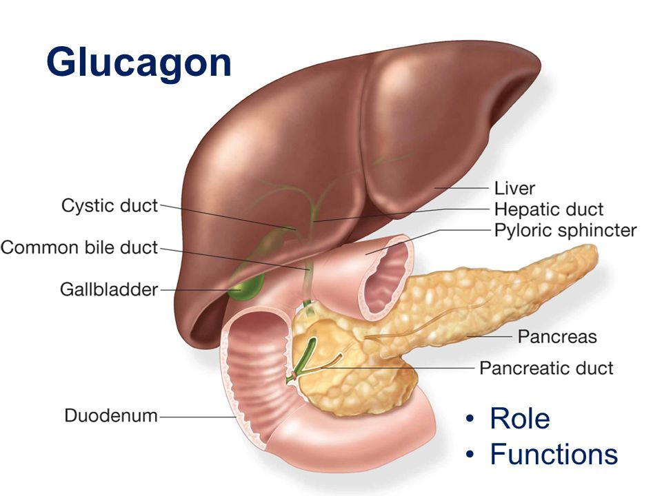 Glucagon Role Functions Talking Points