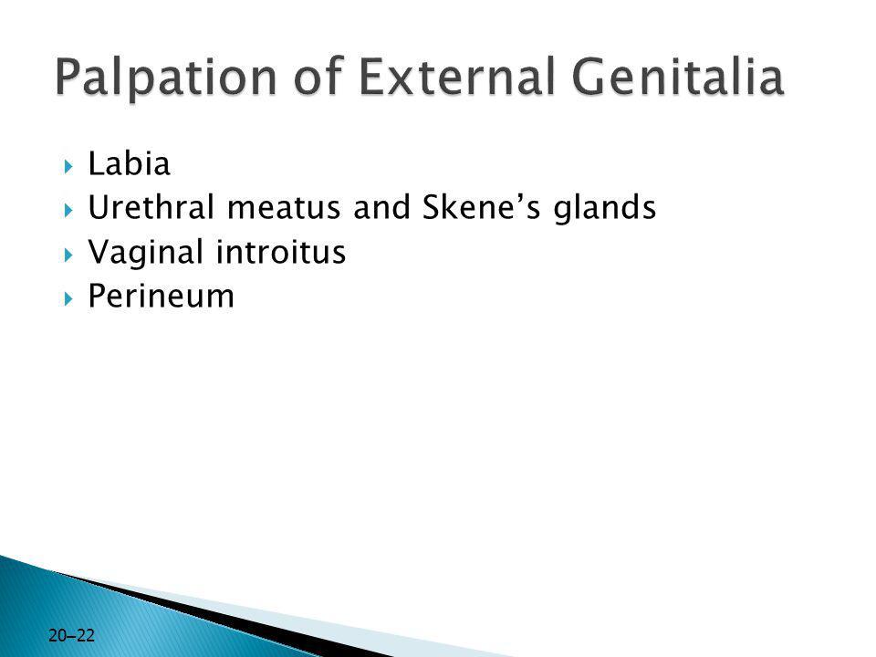Palpation of External Genitalia