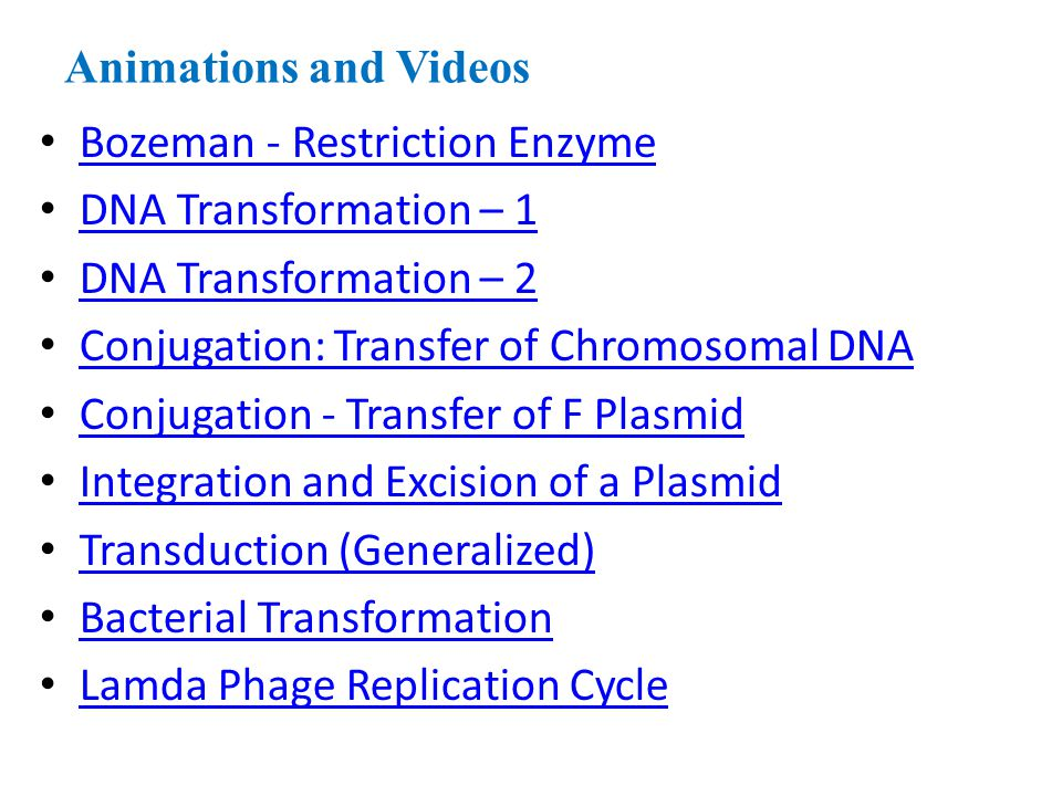 Animations and Videos Bozeman - Restriction Enzyme. DNA Transformation – 1. DNA Transformation – 2.